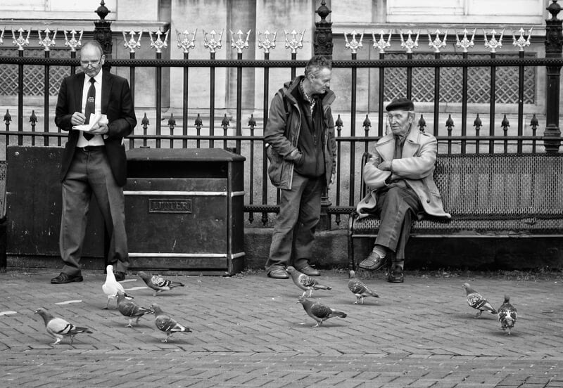 Pigeons - Kingston upon Hull photographs